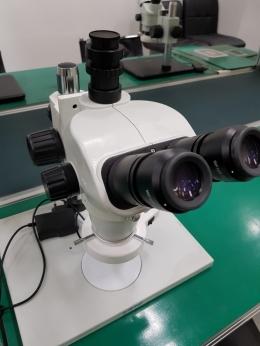 실체현미경