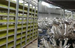 농업용가습기 버섯재배용가습기 벼육묘장가습기 온실용가습기 식물재배 저온저장고 식품저장창고용 가습기